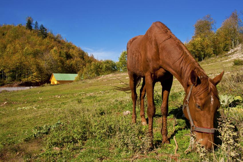 Das todgeweihte Pferd